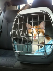 cage-chat-voiture